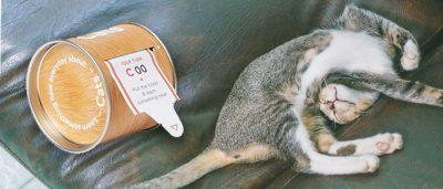 Kattenfacts cadeautip